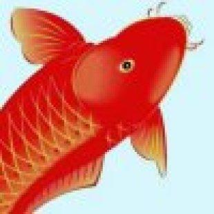小鱼儿94808818