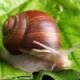 漫步的蜗牛15D9A