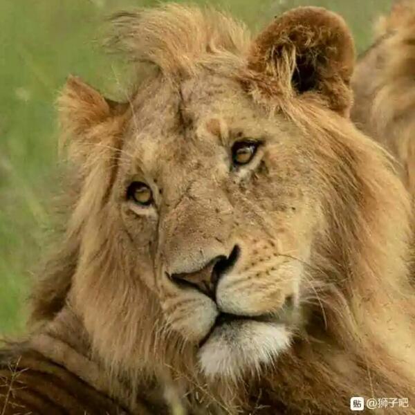 狮子王国大猫世界