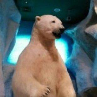 熊出没地球