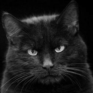 黑猫忍者ss