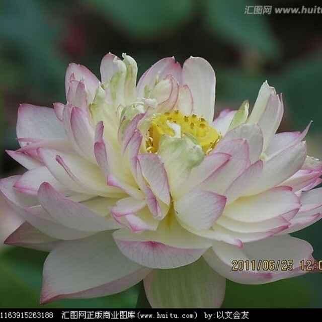 南木木彡16453286