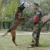特别护卫犬业