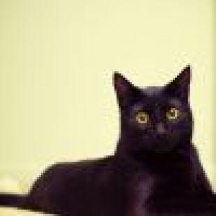 BSN木雕猫